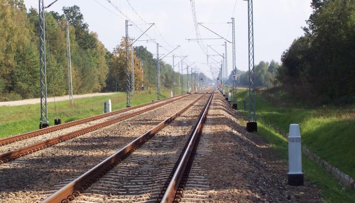 Rosną koszty zderzeń pociągów ze zwierzętami. Dlaczego?