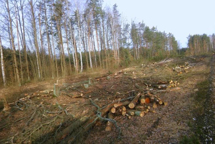 Wycinka drzew wzdłuż jednotorowego odcinka linii radomskiej