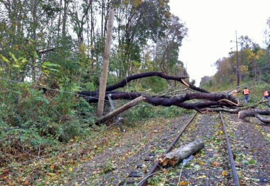 70-letni Czech udawał islamskiego terrorystę, ścinając drzewa na tory
