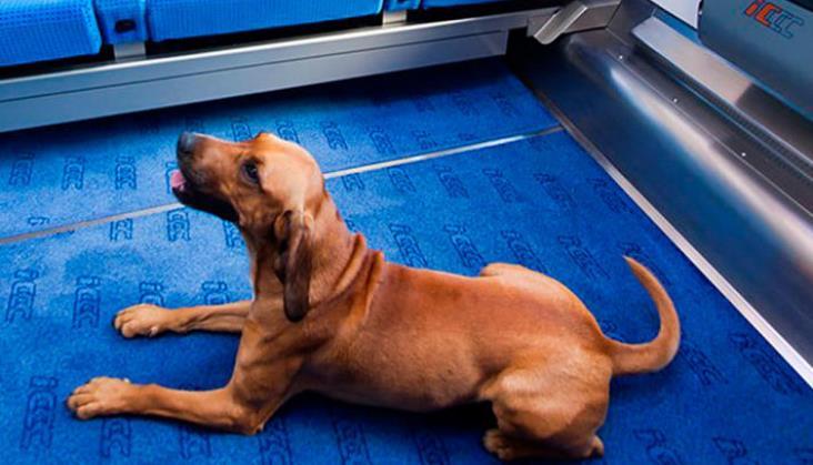 Kiedy nie możemy zabrać psa do pociągu?