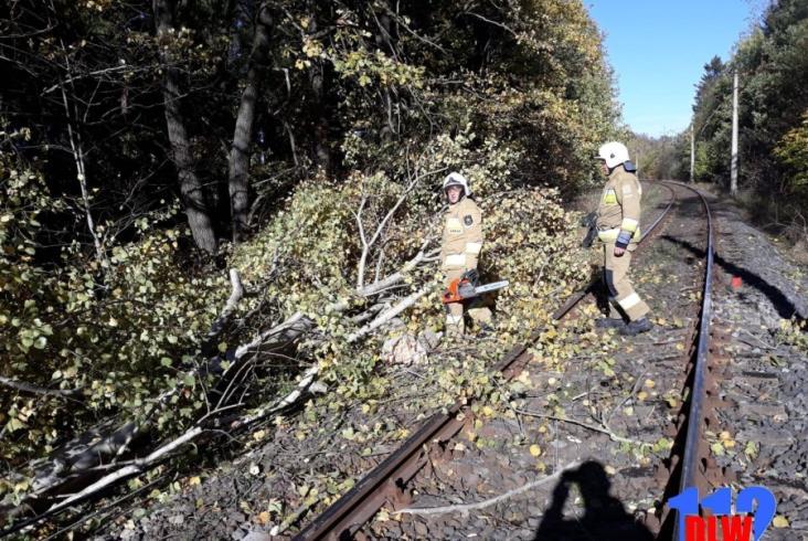 Dolny Śląsk. W powalone drzewo uderzył szynobus KD [zdjęcia]