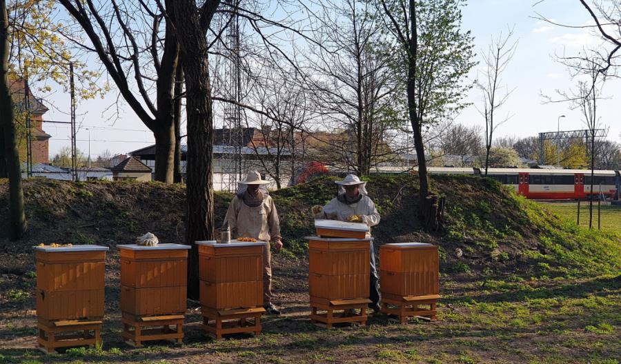 Pszczoły latają w SKM Warszawa
