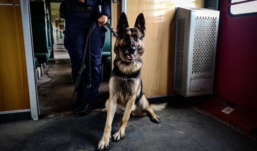 Policjanci szkolili się w EN57 [zdjęcia]