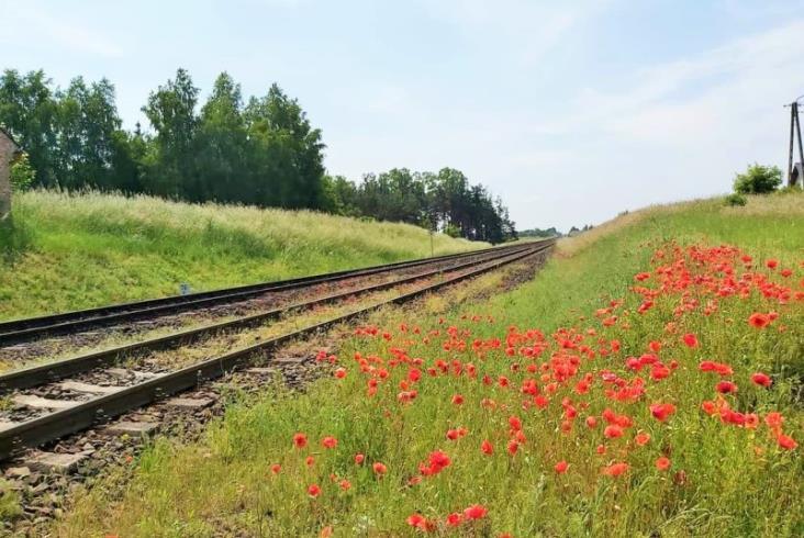 PLK z umową na projekt modernizacji linii na Kociewiu i w Borach Tucholskich