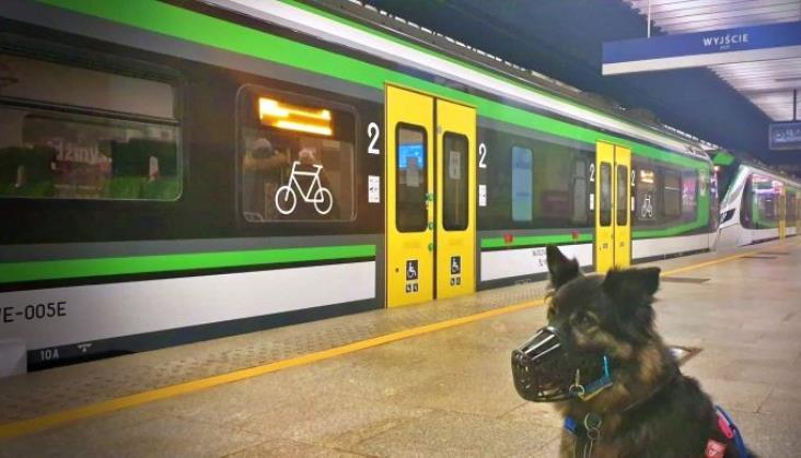 Koleje Mazowieckie pomagają zwierzętom z warszawskiego Palucha