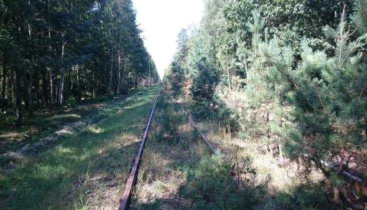 UTK: Drzewa natorze kolejowym nalinii Tarnowskie Góry – Opole Główne